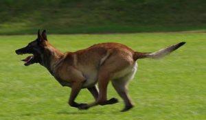 Virtueel wedden op honden